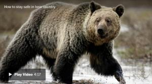 <font color='#0000ff'>[Video] The true story of two fatal grizzly bear attacks that changed our relationship with wildlife</font>